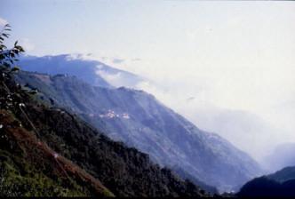 角板山、拉拉山神木二日遊
